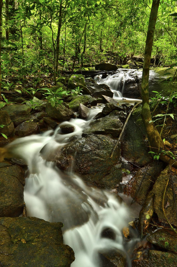 A waterfall near the base of Kasikasima Mountain. The many streams and rivers in southeastern Suriname support a rich diversity of species on land and in the water. Image credit: Trond Larsen.