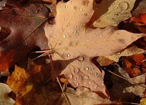 autumn-leaves-ducasse-300