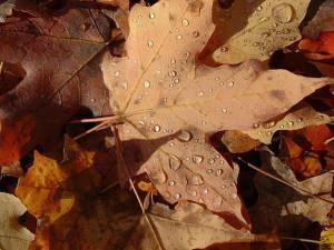 autumn-leaves-ducasse-580