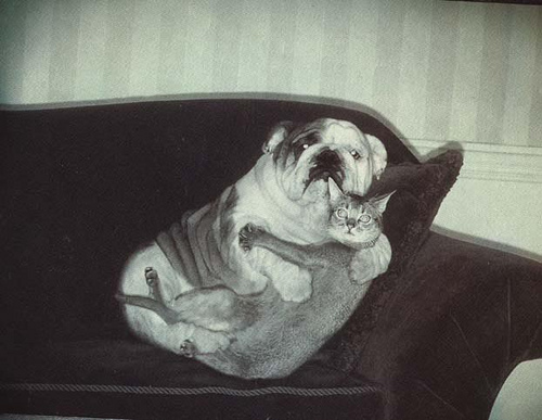 Never let your pets watch scary movies. Never a good idea! Image Credit: John Veldboom via Flickr