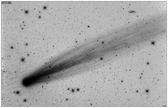 Of course, the telescopic view of Comet ISON remains glorious. This negative - from a photo taken November 15, 2013 by Damian Peach - shows a huge amount of detail, visible after Comet ISON underwent its outburst in mid-November. Photo used with permission. Thank you, Damian!