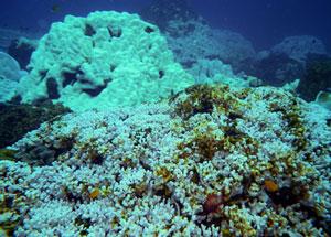 coral-bleaching-eakin-300