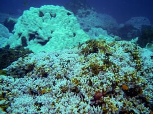 coral-bleaching-eakin-580