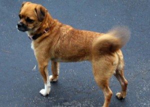 dog-wag-tail