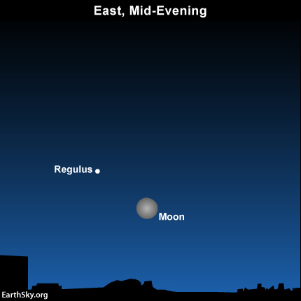 The moon and Regulus are near each other from the time they rise - in mid-evening January 18 - until dawn on January 19.
