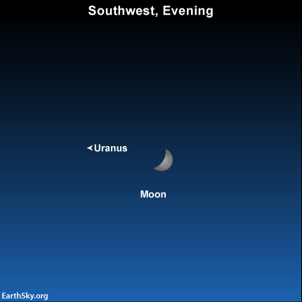 You won't see Uranus tonight.  It'll be hidden in the moon's glare.  But the location of the moon on January 6, 2014 can help you imagine the location of Uranus in your sky.
