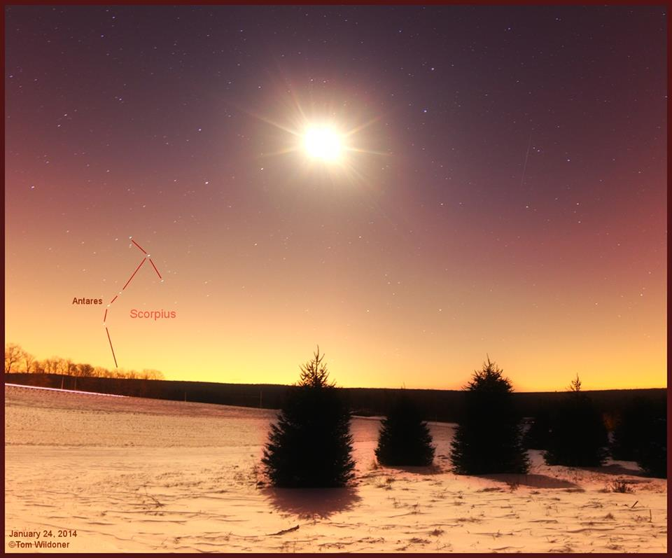 View larger. | Our friend Tom Wildoner captured this photo of the moon and Antares on the morning of January 24, 2014.  He wrote:
