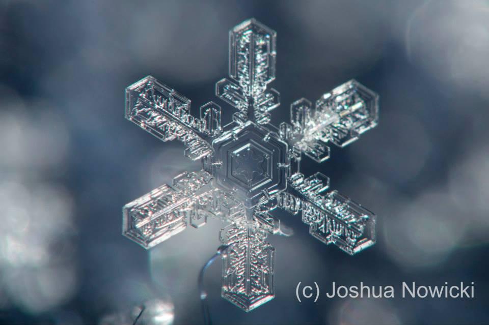 (c) Joshua Nowicki Photoography