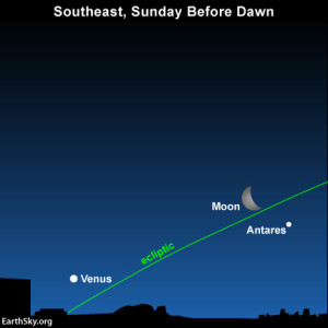 The illuminated side of the waning moon points toward the dazzling planet Venus by the horizon.