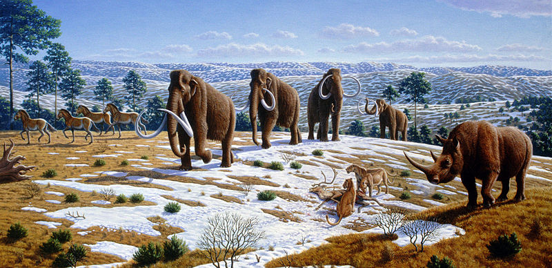 Most images of Woolly Mammoth depict them in grasslands, such as this illustration. New evidence indicates that Ice Age flora was mostly herbaceous flowering plants. Image credit: Mauricio Antón via Wikimedia Commons.
