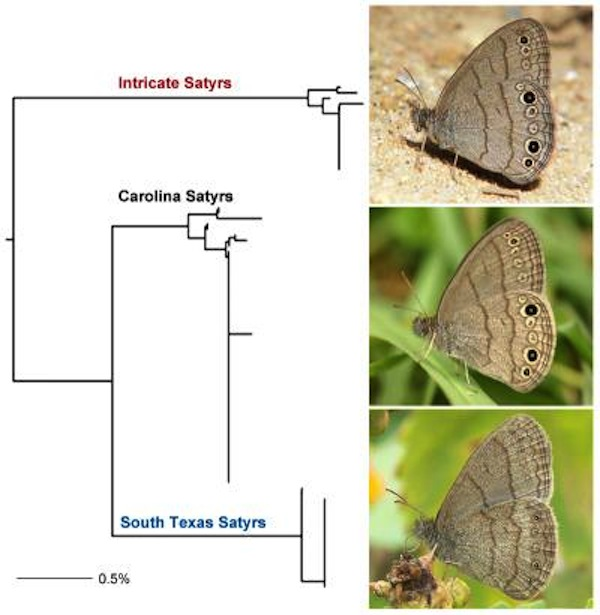 DNA sequencing analysis of the three species can be represented as an