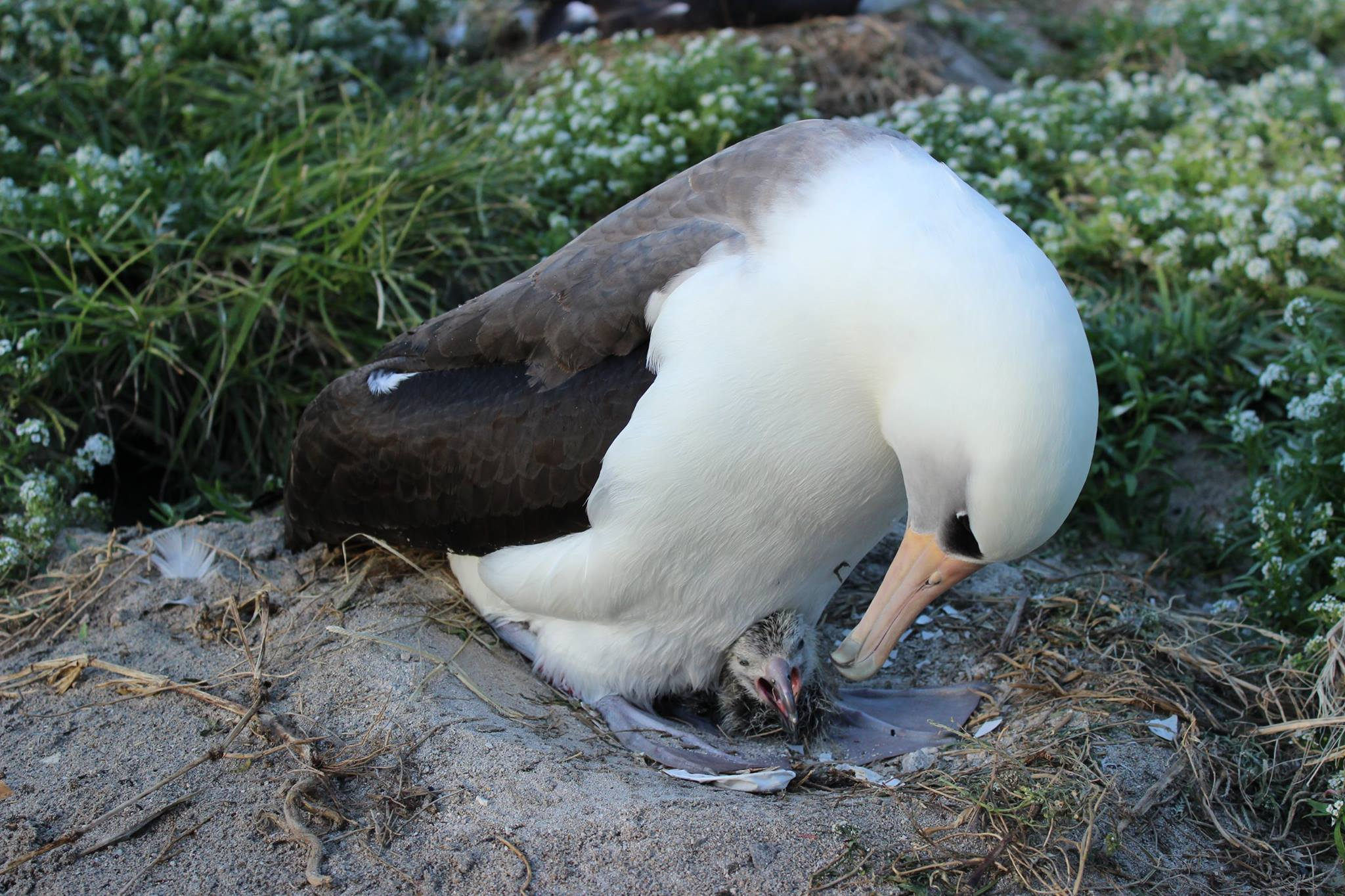World's oldest wild bird gives birth at age 63