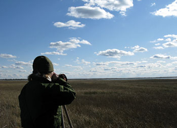 Bird watcher overlooking a marsh. Image Credit: National Park Service.