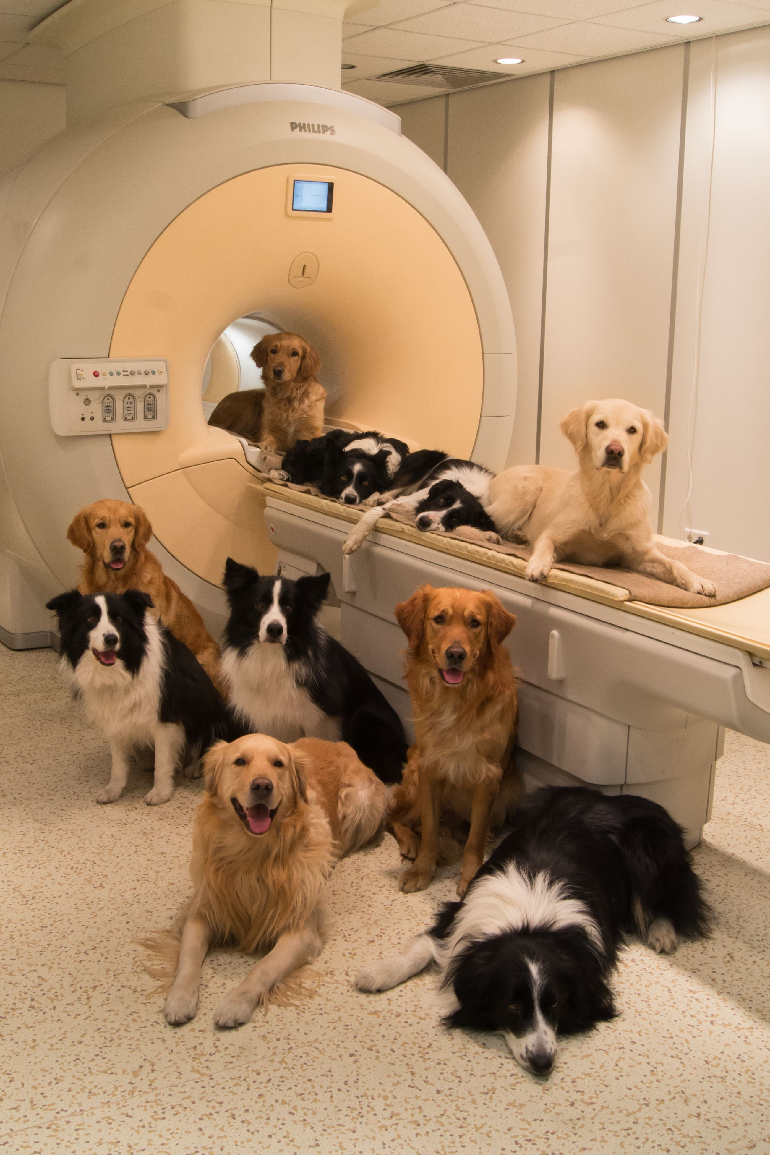 Canine participants of the study. Image credit: Borbála Ferenczy.