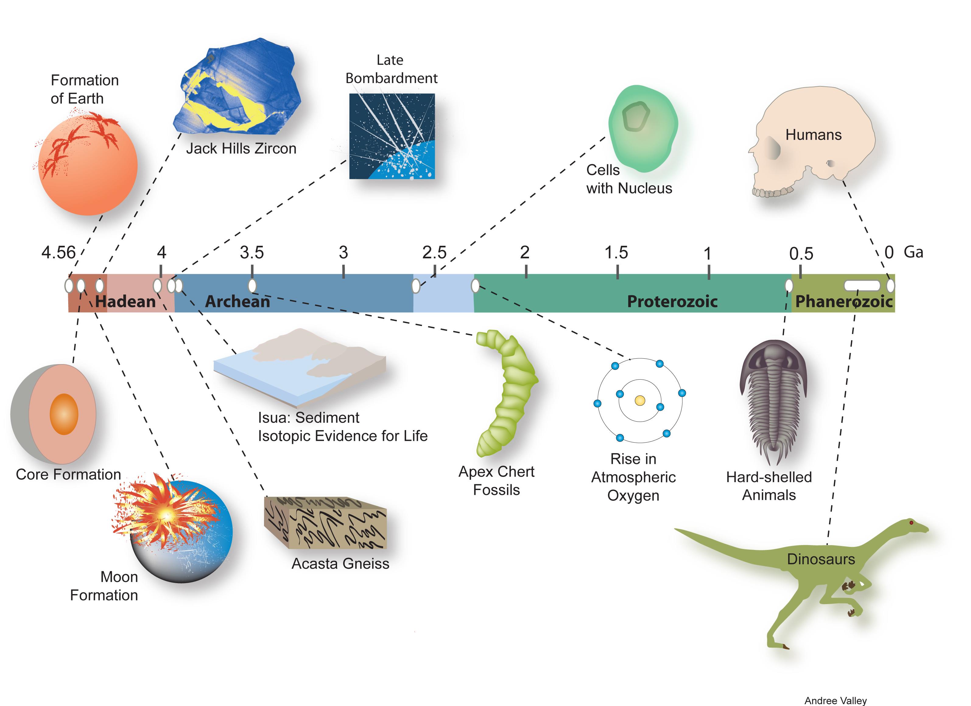 formation of man montessori