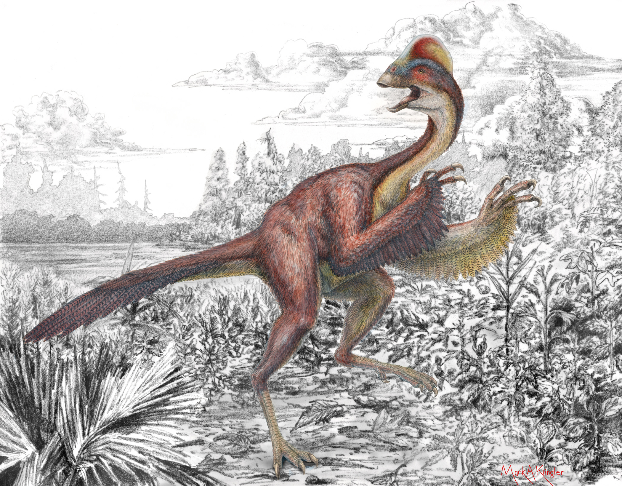 Anzu wyliei, shown here in an artist's illustration, was a feathered dinosaur about 11 feet in length and 5 feet high at its hip. It lived in a humid floodplain environment. Image byMark Klingler, Carnegie Museum of Natural History.