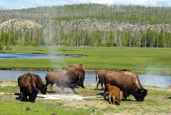 The landscape of Yellowstone National Park is a manifestation of a hotspot below the crust of the Earth.  It is riddled with fault lines, hot springs and geysers, making it among the most popular tourist attractions in the U.S.  Image via Wikipedia.