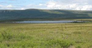 During the last Ice Age, Beringia may have looked similar to Alaska's modern-day shrub tundra. This image, from Eight Mile Lake at the foothills of the Alaska Range, shows birch shrubs in the foreground and scattered spruce trees. Image courtesy of Nancy Bigelow, University of Alaska Fairbanks.