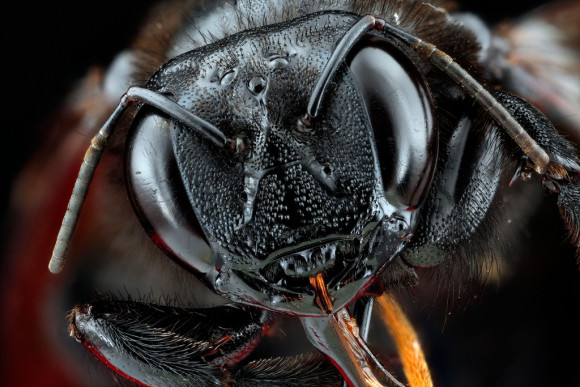 Photo credit:  Sam Droege/USGS