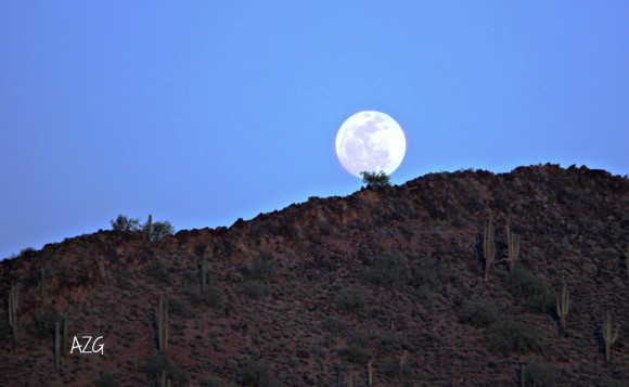 Arizona Gals: Arizona Moon