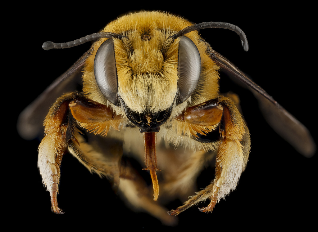 Five awesome BIG bee faces