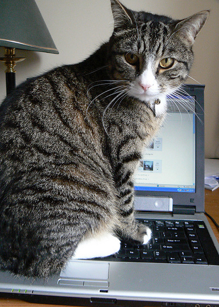 Another problem with laptops. Image: dougwoods.