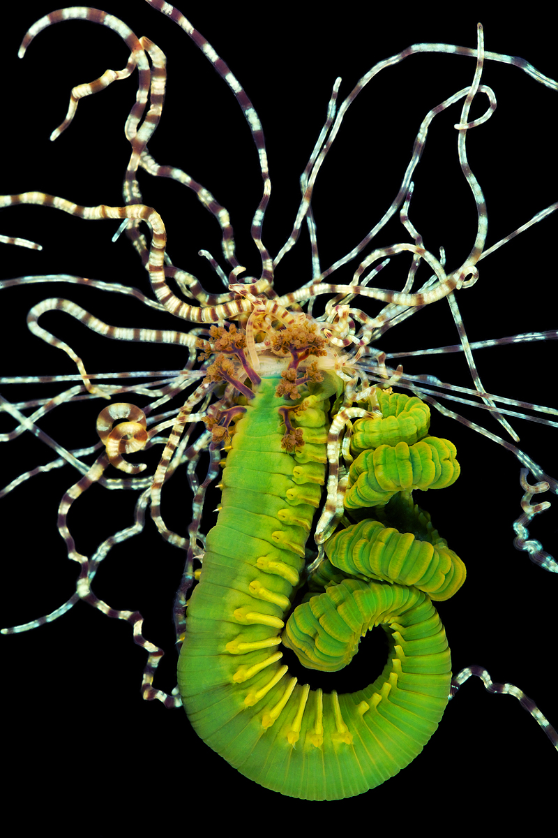 Astounding photos of marine worms, some previously unknown to science