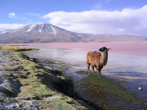 Bolivian Altiplano via Flickr user Phil Whitehouse.