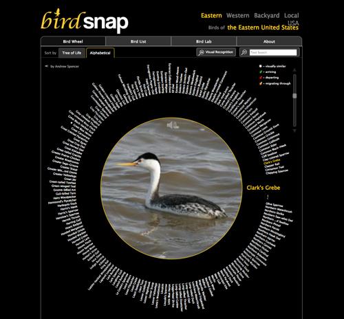 Image courtesy of Birdsnap