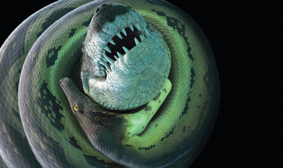 A new crocodilian species lived in freshwater rivers 60 million years ago, in close proximity to Titanoboa, a monster snake that would have been a formidable threat, says Jonathan Bloch.