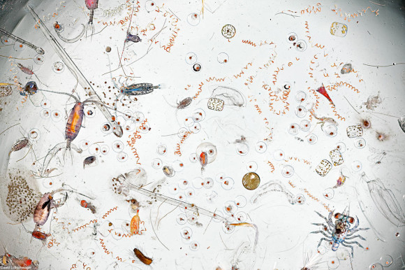 Drop of seawater magnified 25 times, by photographer David Littschwager, via thisiscolossal.com