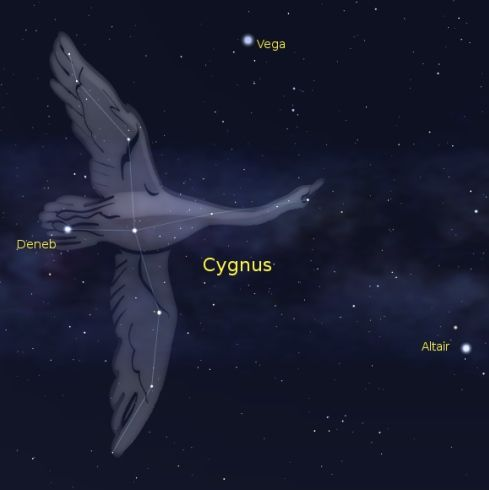 Chart of starry sky with picture of long-necked flying swan constellation and Deneb, Altair, and Vega labeled.