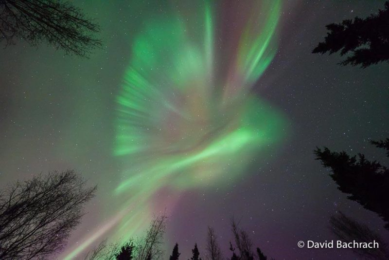 Aurora borealis by Dave Bachrach.  Used with permission.