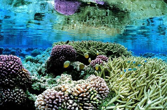Coral garden at the Palmyra Atoll National Wildlife Refuge. Image Credit: Jim Maragos, USFWS.