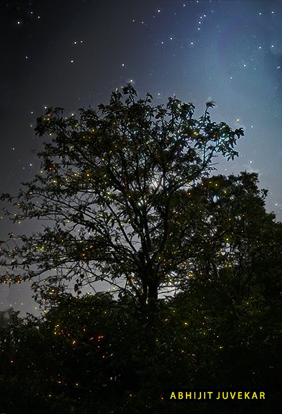 Fireflies and stars, by Abhijit Juvekar.