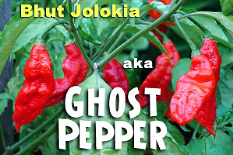 Ghost peppers: So hot it's spooky