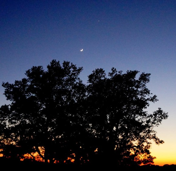 View larger. | Here is a sweet view from last night - May 31 - of the moon and Jupiter in the twilight sky, from Deba Fryar Calobreves in the Texas Hill Country.