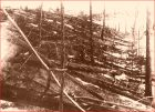 Fallen trees at Tunguska.  This image is from 1927, when Russian scientists were finally able to get to the scene.  Photograph from the Soviet Academy of Science 1927 expedition led by Leonid Kulik.