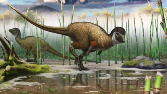 Artist's illustration of the feathered dinosaur Kulindadromeus zabaikalicus based on fossils discovered in Siberia. Image credit: Andrey Atuchin