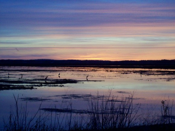 Pink and blue striped clouds over shallow lake with standing birds.