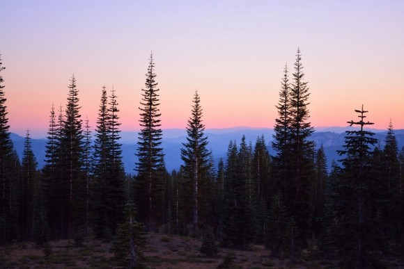 Many pointy fir trees against stripe of blue hills and pale pink sky.