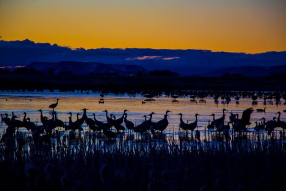 Yellow sky on horizon, deep blue hills below, many big birds standing in lake in foreground.