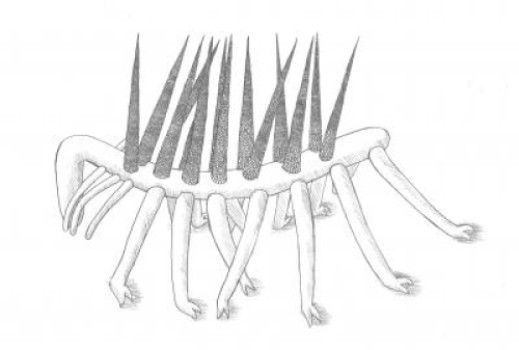 This is a reconstruction of the Burgess Shale animal Hallucigenia sparsa. Image credit: Elyssa Rider