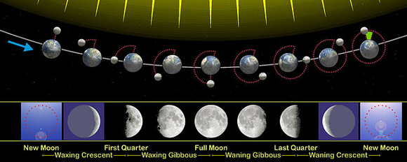 One lunar month is the period of time from new moon to new moon. As viewed from the north side of the Earth's and moon's orbital planes, the Earth goes counterclockwise around the sun and the moon goes counterclockwise around Earth. Image credit: Wikipedia