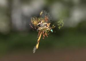 Artist Andy Thomas animates bird sounds