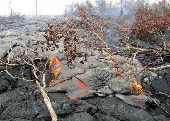 The lava from Kilauea volcano burns through vegetation in its path.  Photo via USGS