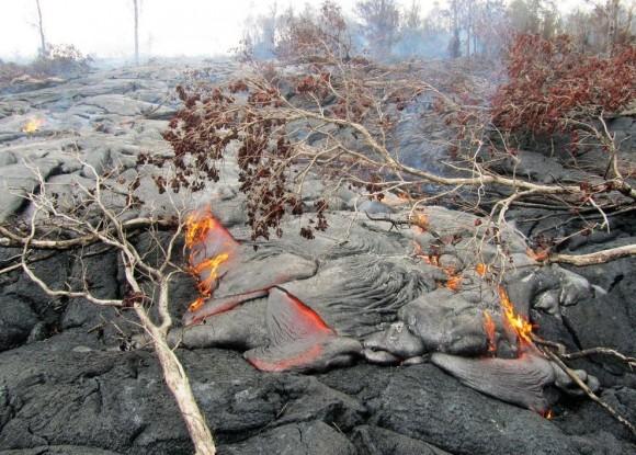 The lava from Kilauea volcano burns through vegetation in its path.  Photo via USGS
