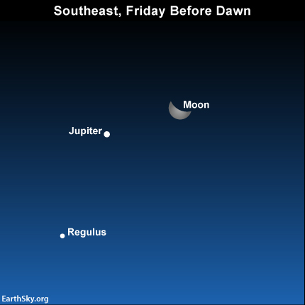 If you're up before dawn, you can see Regulus, the brightest star in the constellation Leo the Lion, below the moon and Jupiter.