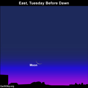 Fortunately, the thin waning crescent moon rising shortly before sunrise won't intrude on this year's Orionid meteor shower.