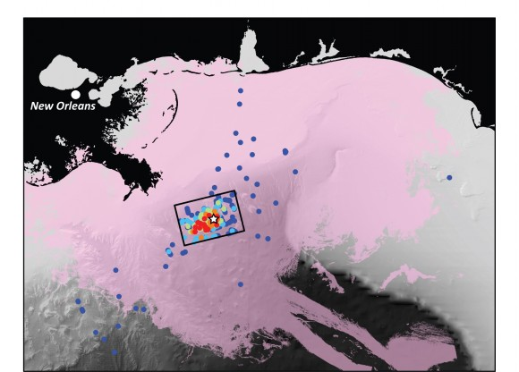 Map of the Northern Gulf of Mexico with sampling sites in the study. Hotter colors equal more oil. Image credit: David Valentine et al.